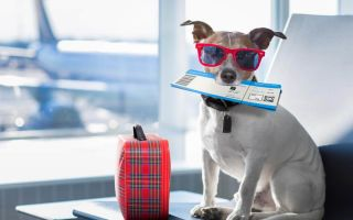Правила перевозки собак в самолете в 2019 году
