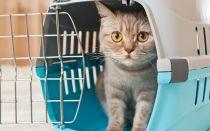 Правила перевозки кошек в 2019 году