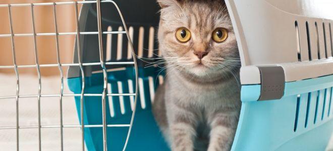 Правила перевозки кошек в 2018 году