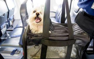 Правила провоза животных в самолете