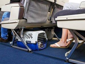 Какие переноски для кошек можно в самолет thumbnail